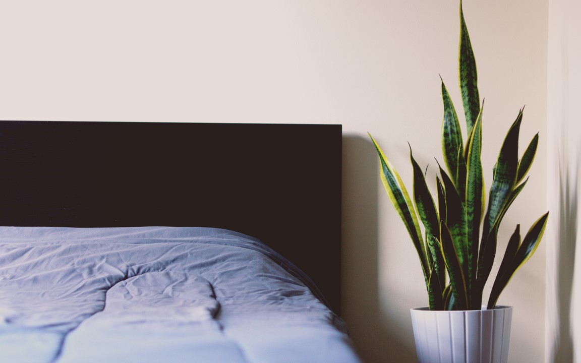 blue sheets and bedside table with snake plant